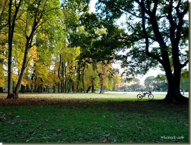 ユリノキと自転車