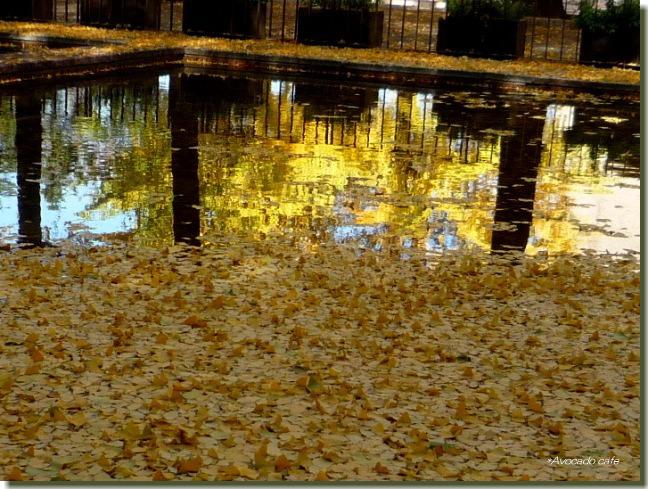 中央公園池