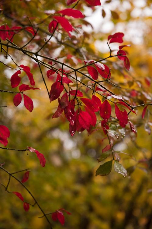 colored_leaves.jpg