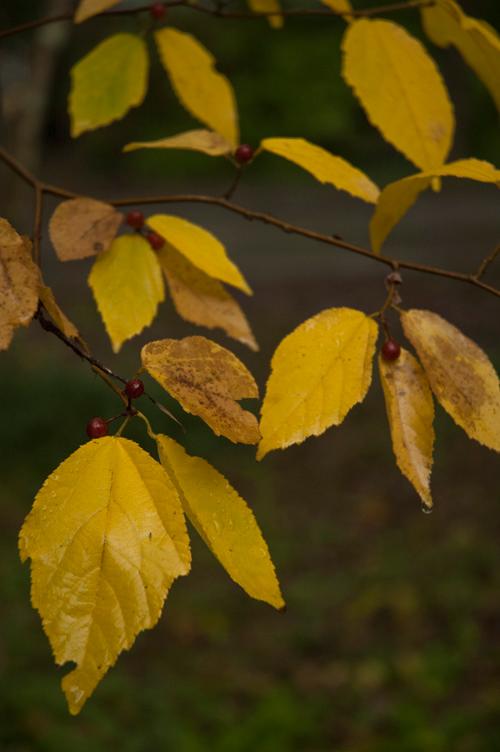 colored_leaves_3.jpg