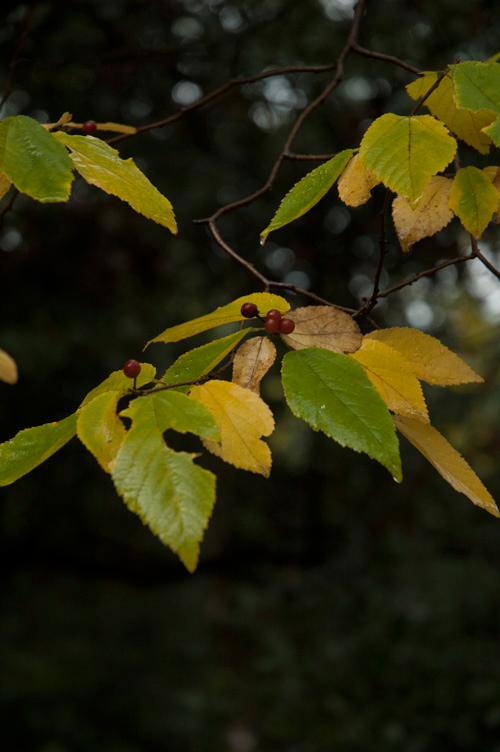 colored_leaves_4.jpg