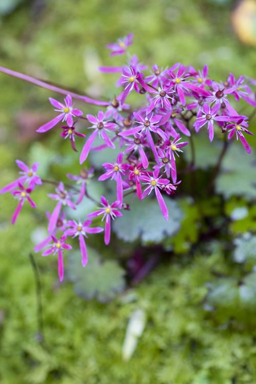 daimonziso_14_11_4_4.jpg