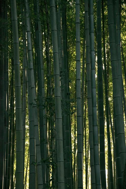 daitokuzi_14_1_3_5.jpg