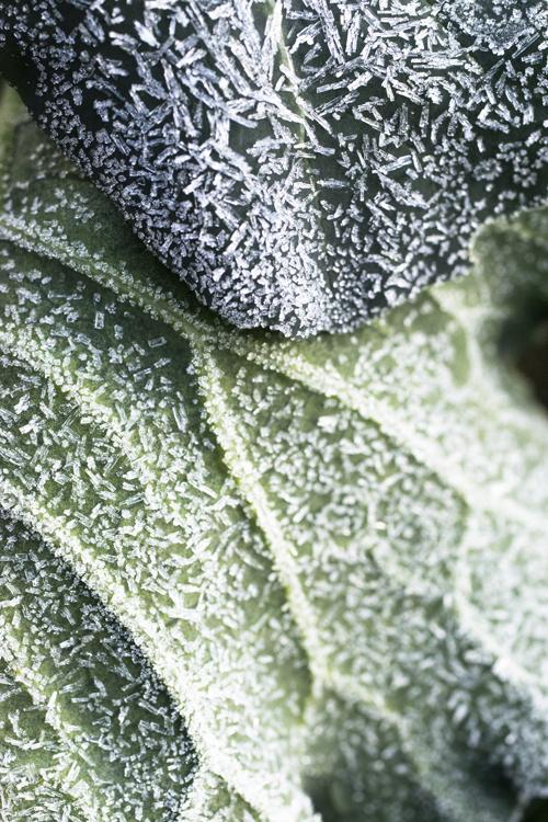 frost_14_10_15_2.jpg