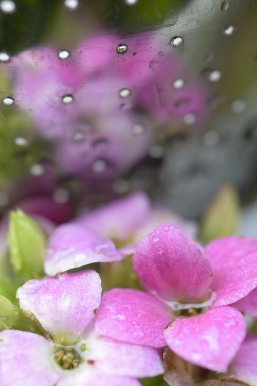 rain_14_11_2.jpg