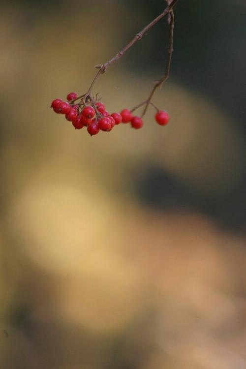 redfruit_13_11_30_3.jpg