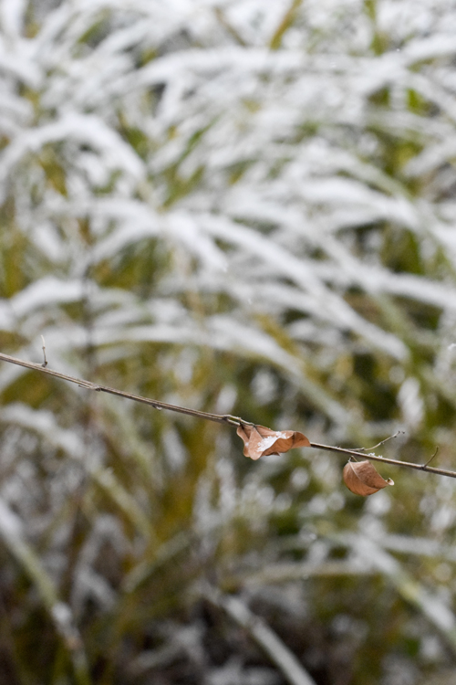 snow_1412_18_3.jpg