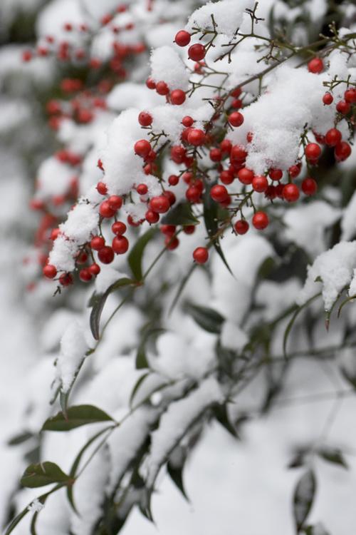 snow_1412_18_4.jpg