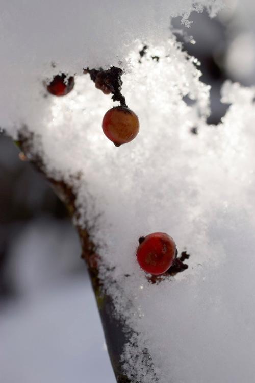 snow_14_10_12.jpg