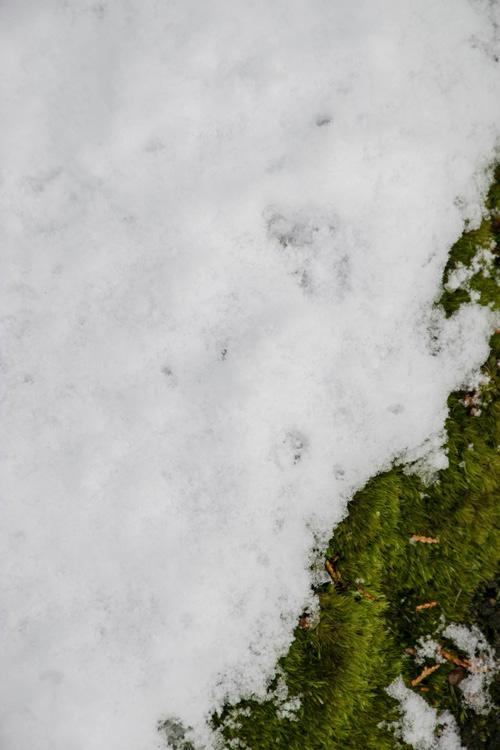 snow_14_10_2.jpg