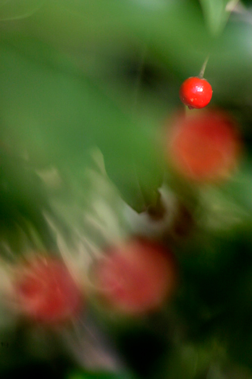 soyogo_13_11_30_2.jpg