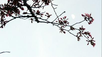 桜2012-04-30 (2)
