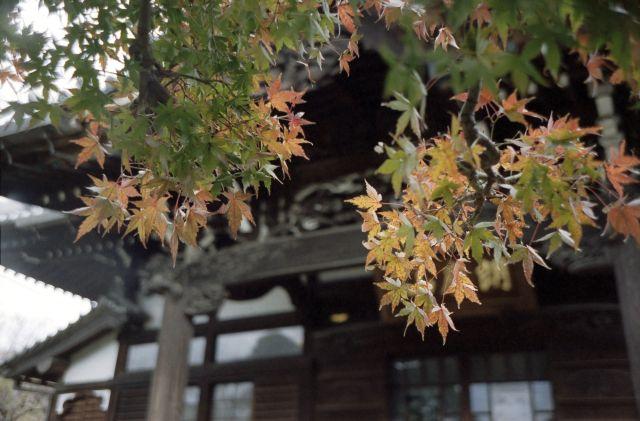 秋深し2013-08a