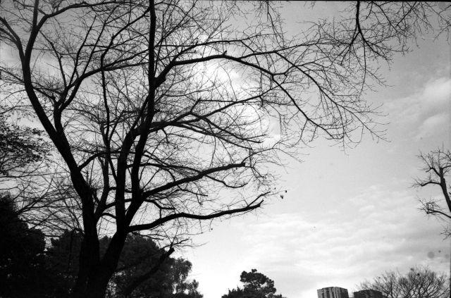 秋深し2013-11d
