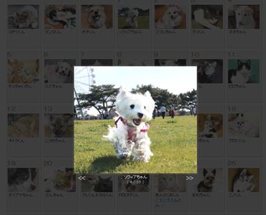 写真をクリックすると、大きめの写真が出てきて順番に見ることができます