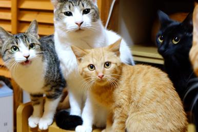 cat4_2014_1_6.jpg