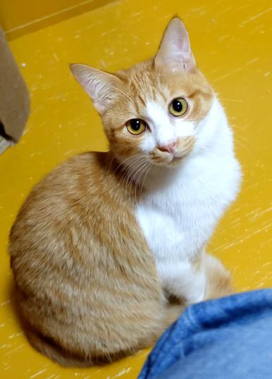 弱い猫ちゃんをかばう正義感の強いニャトちゃんは相棒タイプ