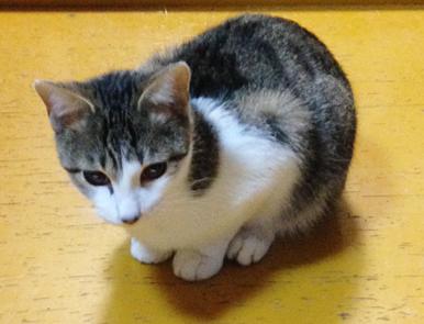 見た目は小柄でまだ子猫のようなビスタくんです。いつから大きくなるのかな