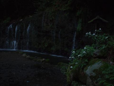 千条の滝 ホタル