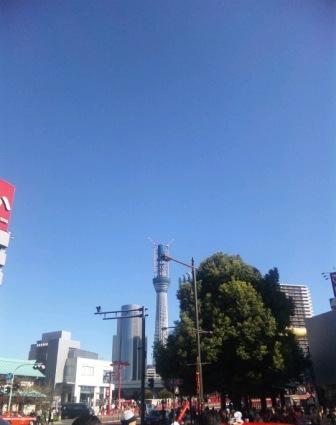 sky_tree2.jpg