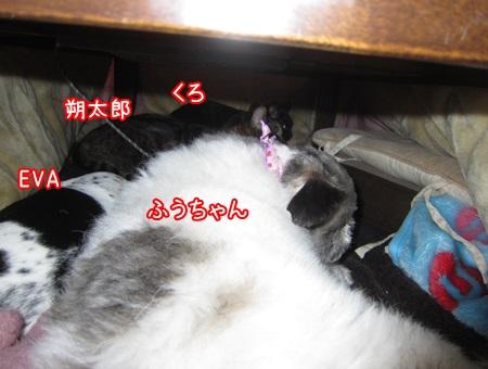 0108-05_20140108152909dae.jpg