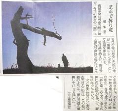 まるで昇り竜 気仙沼 朝日新聞 20120107