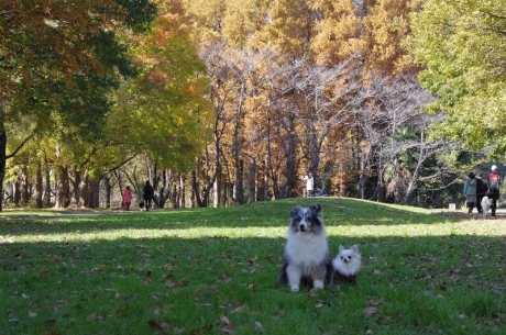 紅葉の秋ヶ瀬