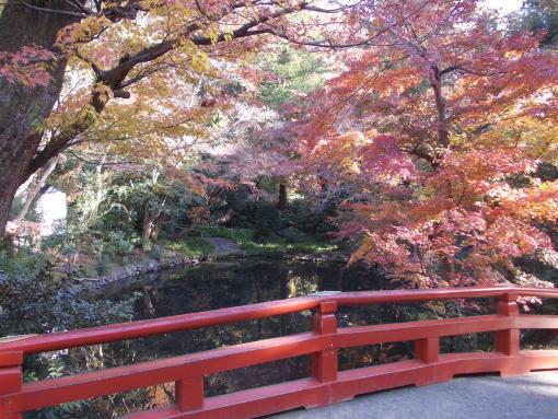 20141207_鶴岡八幡宮の紅葉