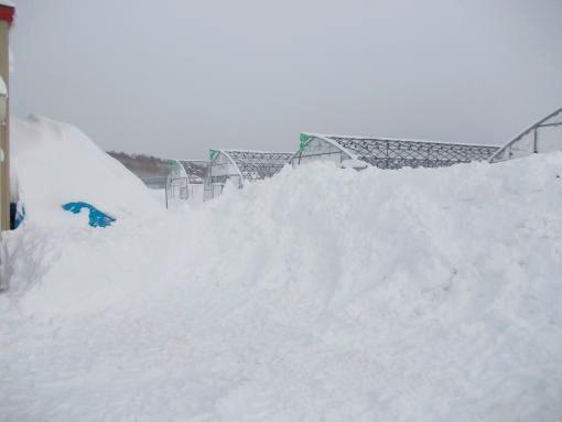 20141218_大雪3