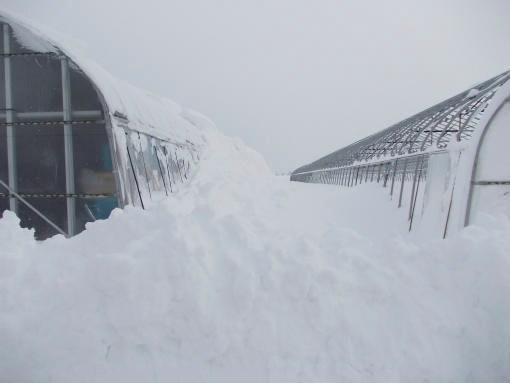 20141218_大雪5_天井の雪が落ちない状態まで積もった