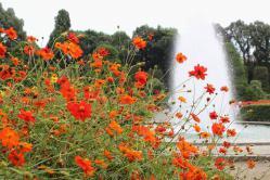 111103植物園⑨噴水とコスモス