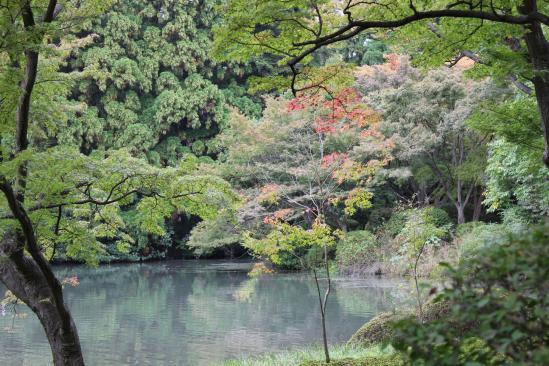 111103植物園⑬もみじの池