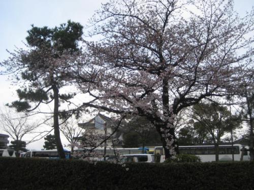 120406朝さんぽ・堀川②