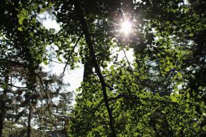 120708-1御所の木漏れ日①