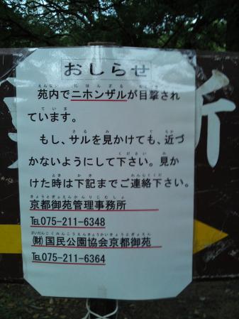 120829御所にて②「ニホンザル」