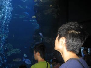 120924京都水族館09