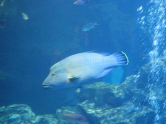 120924京都水族館13