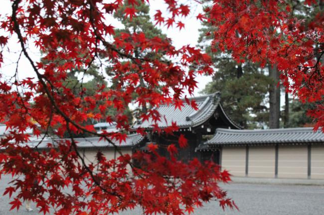 121123秋の御所⑨・大宮御所前の紅葉