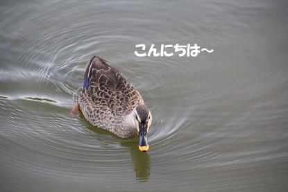 a_0923.jpg
