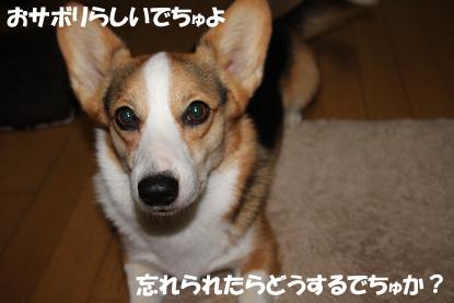 a_2997.jpg