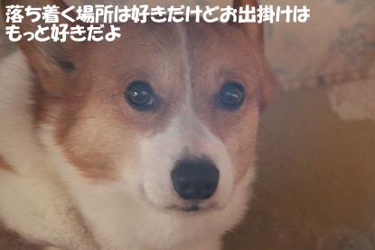 a_3137.jpg