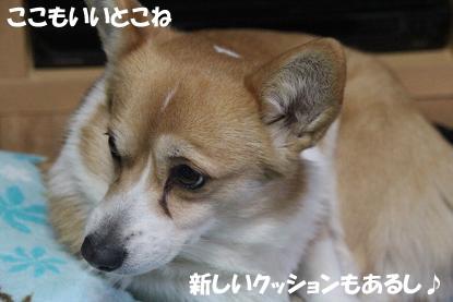 a_3242.jpg