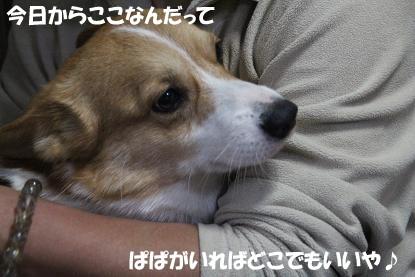 a_3243.jpg