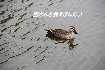 a_6217.jpg