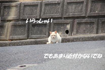 a_6477.jpg