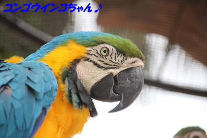 a_6553.jpg