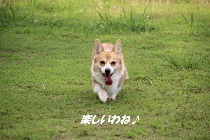 a_6706.jpg