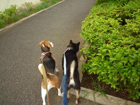 お散歩の途中に・・・