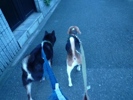朝早くからお散歩♪