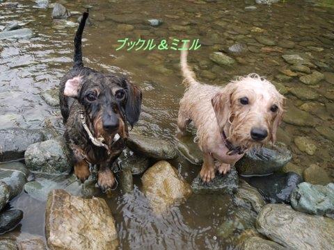wet_sisters_0827